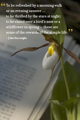 Lady Slipper, 'To be refreshed by a morning walk ... ' - John Burroughs